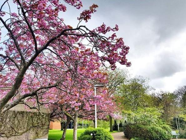 blossom-tree.jpg